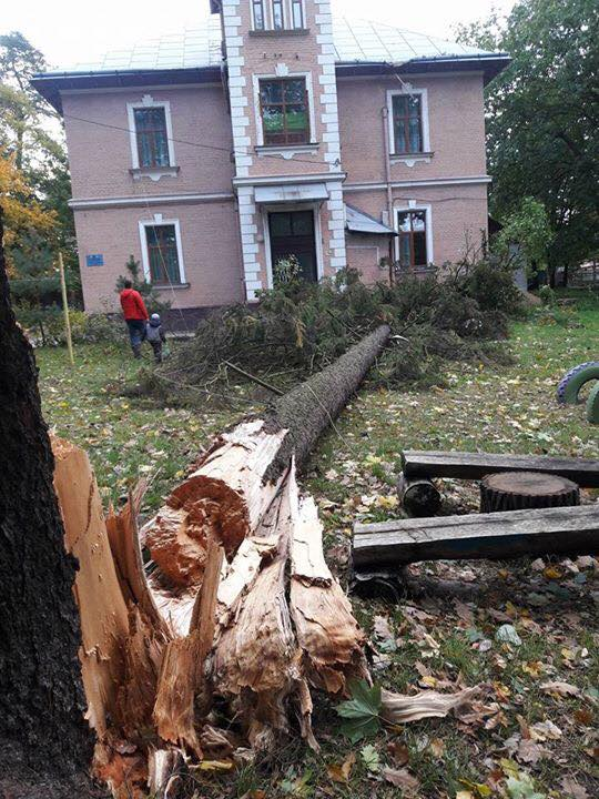 Toppled trees and damaged cars: State Emergency Service liquidating storm aftermath in Lviv and region 06