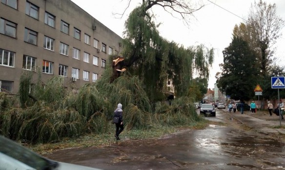 Toppled trees and damaged cars: State Emergency Service liquidating storm aftermath in Lviv and region 04