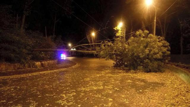 Toppled trees and damaged cars: State Emergency Service liquidating storm aftermath in Lviv and region 09