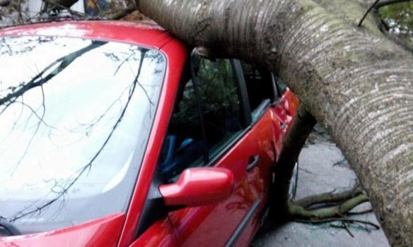 Toppled trees and damaged cars: State Emergency Service liquidating storm aftermath in Lviv and region 02
