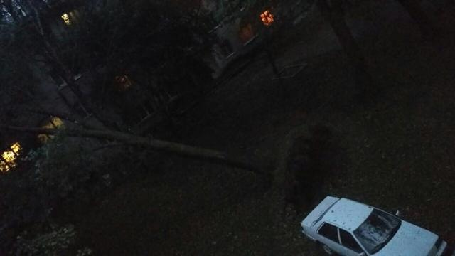 Toppled trees and damaged cars: State Emergency Service liquidating storm aftermath in Lviv and region 10