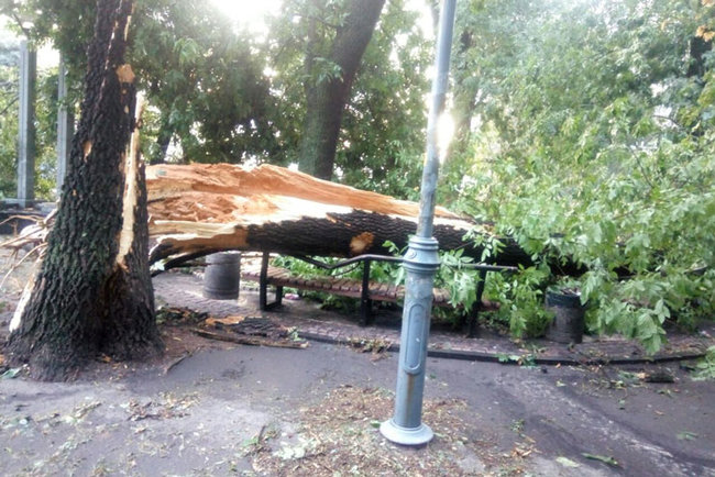 Aftermath of severe rainstorm in Kyiv: flooded city center, dozens of fallen trees 03