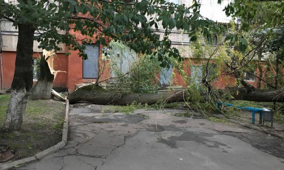 Toppled trees and damaged cars: State Emergency Service liquidating storm aftermath in Lviv and region 01