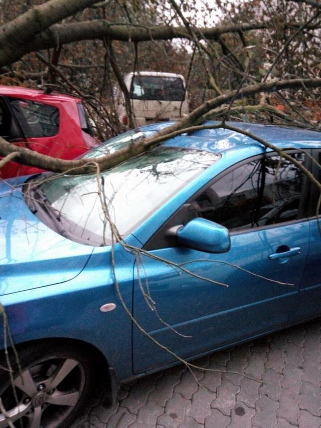 Toppled trees and damaged cars: State Emergency Service liquidating storm aftermath in Lviv and region 08